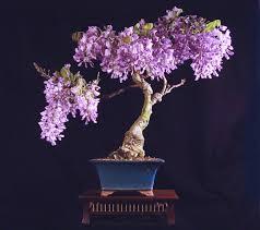 ულამაზესი ყვავილების ხეივანი - იაპონია